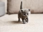 kitten-22594219